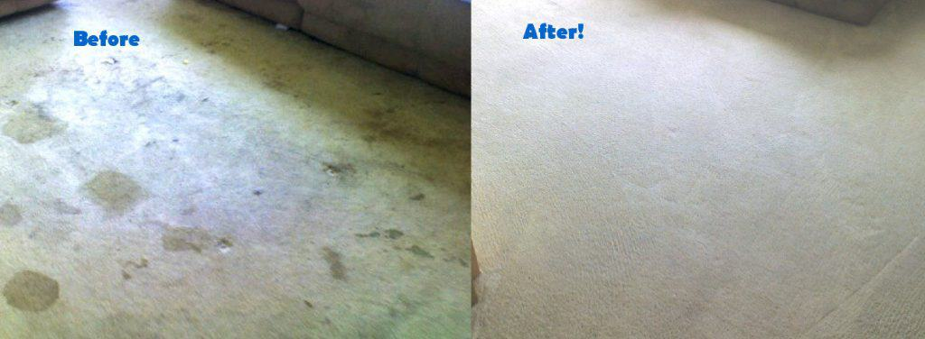 Carpet Cleaning Colorado Springs before and after